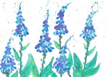 blue foxgloves